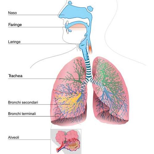 La polmonite - terapia respiratoria